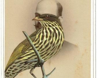 Antique Cabinet Card Photo, Bird Portrait Art, OOAK Mixed Media Wall Art, Original Collage Photo, Victorian Art, Surreal Bird Artwork