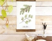 Conifer Study - Pine sprigs Mini wall hanging, wood trim watercolor art printed on textured cotton canvas. Vintage Inspired Science chart