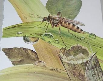 Mosquito Print Severt Andrewson 11520 Scriptural Scripture