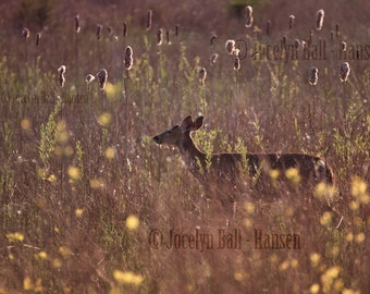 Wrapped Canvas Print, White Tailed Deer in Glowing Field of Wild Flowers, Dreamy Rural Landscape and Wildlife Archival Wall Art Print