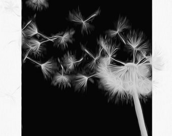 Black and White Photography - Dandelion 1 fine art print for home, office, or dorm room - elegant home accents, wall art, interior art