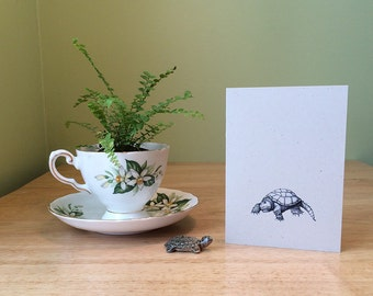 Turtle note card. Small note card for thank yous or any occasion. Turtle illustration with snapping turtle facts on the back.