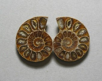 fossil AMMONITE cabochons matching pair two 28X35mm designer cabs