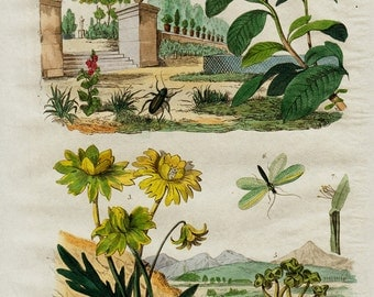 1838 Antique print of flowers, coastal flora, insects, gardens, original antique 179 years old