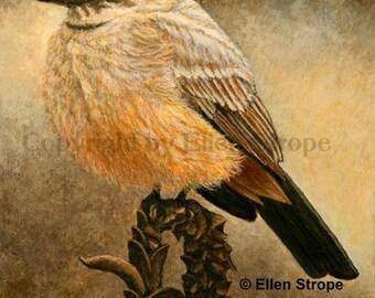 ACEO Card, Giclee print, Say's Phoebe, bird art, bird ACEO, ACEO cards, bird decor, Ellen Strope, prints, art, song birds