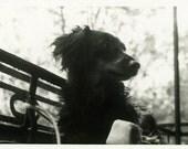 "Vintage Photo ""Park Pup"" Snapshot Photo Old Antique Photo Black & White Photograph Found Paper Ephemera Vernacular - 152"