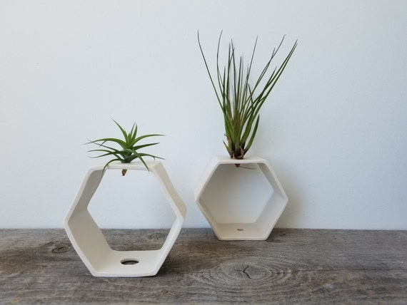 Hexagon Tabletop Air Plant Vase, Reversible Design