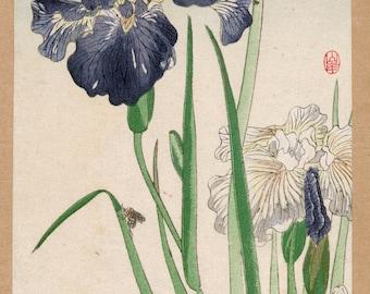Japanese Art Reproductions. Irisis, c. 1870s. Fine Art Print