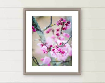 Pink cherry blossoms photograph pink flower photo spring flora images oversized large wall art botanical wall decor Mother's day gift