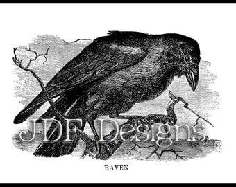 Instant Digital Download, Vintage Victorian Era Graphic, Raven Book Plate Engraving, Antique Gothic Print Printable Scrapbook, Halloween