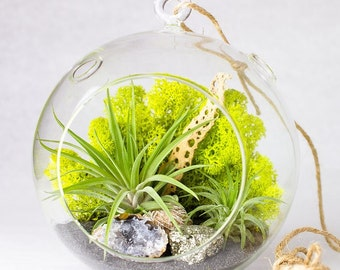 Hanging Terrarium Kit with Air Plants, Geode, Pyrite, & Desert Rose || California Modern || Large Round