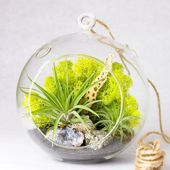 Hanging Terrarium Kit with Air Plants, Geode, Pyrite, & Desert Rose || California Modern || Large Round