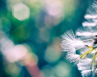 Dandelion Photograph, Teal Bokeh Macro Photo Print, Wishing Seed Picture, Horizontal Wall Art, Ethereal Dreamy Photography, Nature Photo