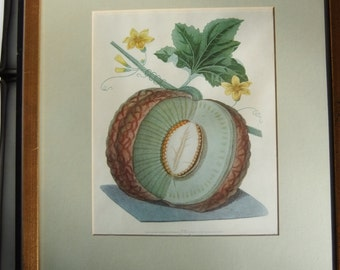 Framed Melon Print from Pomona Britannica by George Brookshaw