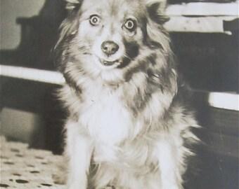 Weird 1940's Crazy Eyed Dog Snapshot Photograph - Free Shipping