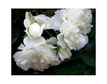 White Rose Art, White Floral Art, Large Nature Art Print, Fine art Photography, White Wall Art, Roses Wall Decor, Flower Photography