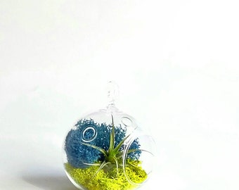 Glass Terrarium with Air Plant//Valentine's Day Gift