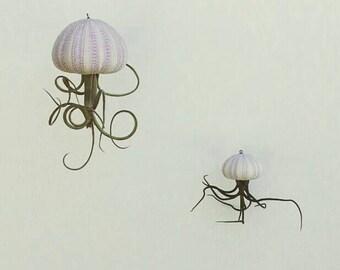 Hanging Air Plant // Terrarium // Air Plants