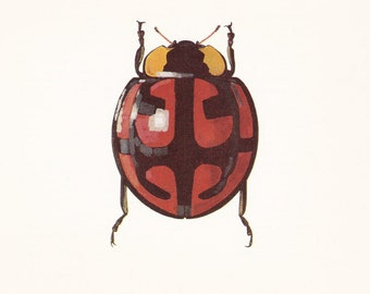 vintage beetle art print Ladybird Beetle Ailocharia mirabilis coccinellidae home decor 8x10 inches