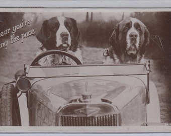 Authentric Antique Real Photo St Bernard Dogs Sitting In An Antique Car