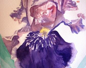 Iris Watercolour Flower Painting, Iris Art, Original Australian Watercolour Painting, Purple flower painting, purple bearded iris, floral