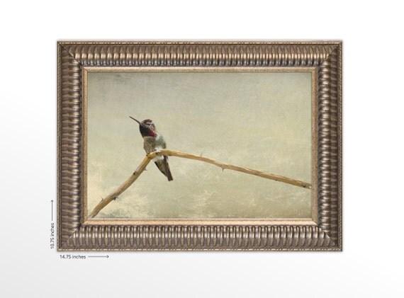 Hummingbird Sitting on a Branch. Minimalistic Fine Art. Nature Photography. Framed Fine Art Print. FREE SHIPPING.
