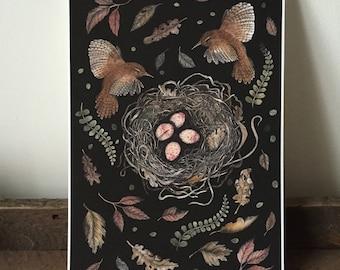 Wren Nest Giclee A4 print - woodland birds