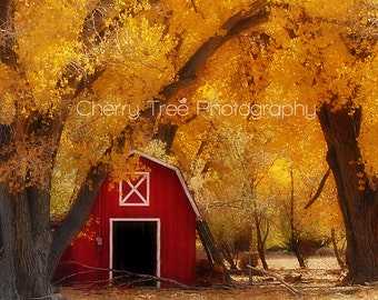 Rustic Barn with Autumn Leaves Fine Art Photograph