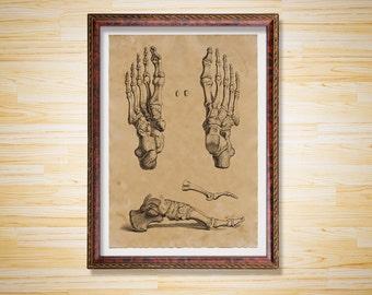Skeleton print Anatomy poster Antique foot decoration