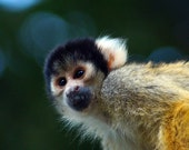 Monkeying About - Mounted...