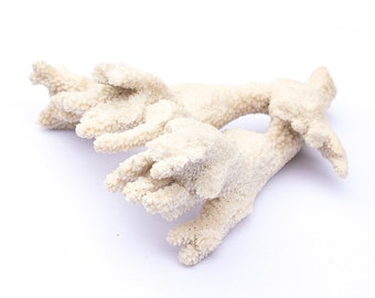 Large Natural White Sea Coral Branch