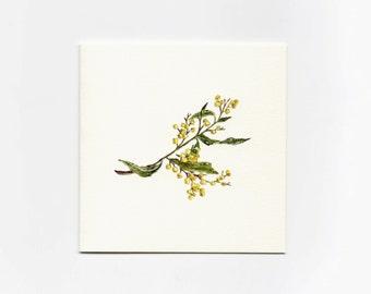 Acacia Wattle- Mini Greeting Card