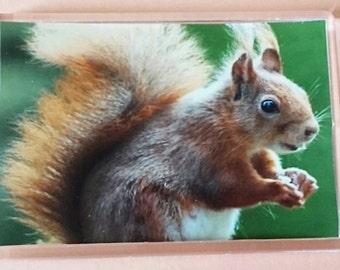 Red Squirrel - Jumbo Acrylic Fridge Magnet