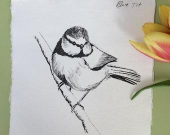 Blue Tit Ink Sketch
