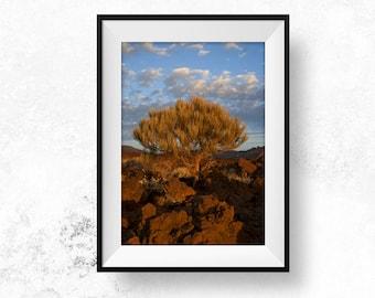 Tenerife Minimal Art Printable Photography Sunset Photography Download Minimalistic Tree Spain Digital Art Download Wall Art Bohemian Photo