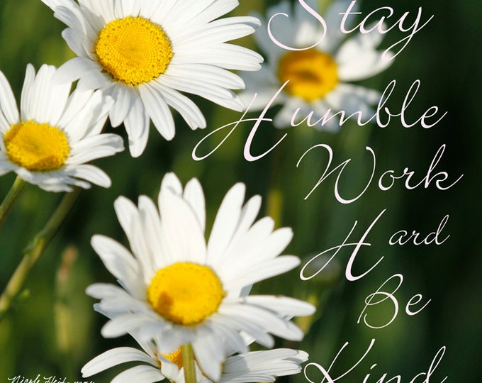 Daisy Photo Daisy Photography Daisy Decor Flower photo Flower Decor White & yellow flower Gift for her Mom daisy quote by Nicole Heitzman