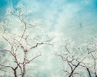 Canvas Art, Tree Photograph, Modern Art, Winter Landscape, Dramatic Art Print, Contemporary, Hoar Frost, Aqua Wall Decor, Snowy Photo
