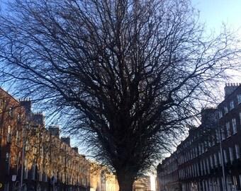 Winter Tree, Baggot Street, Dublin, Ireland Photography