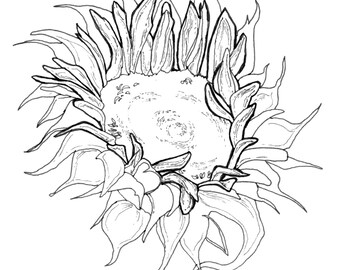 Floral Adult Coloring Book Digital Download Downloadable Flower Themed Pages Sunflower