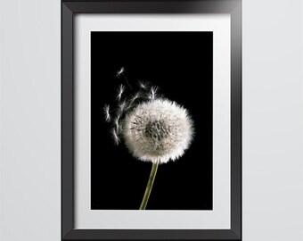 Dandelion! Macro photography. Minimalist flower, Modern print for home interior decoration