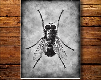 House Fly Print, Insect Decor, Fly illustration BW373