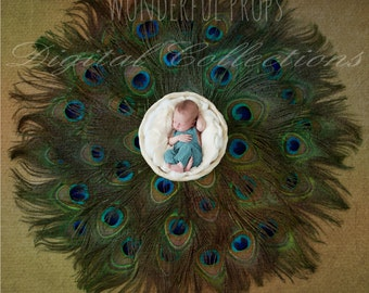 Digital Newborn Photography Prop - Fairy Tale -  Feathers Nest Prop Backdrop -SET of 6 Pictures as shown