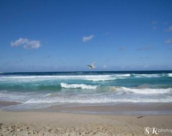 Bondi Beach Photography Print