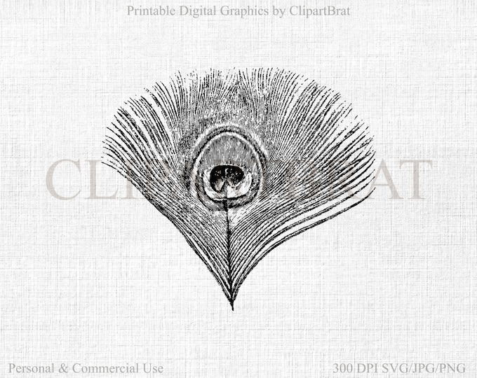 PEACOCK FEATHER Clipart Commercial Use Clipart Digital Stamp FEATHER Graphic Fabric Transfer Clipart Feather Vector Graphic Jpg/Png/Svg