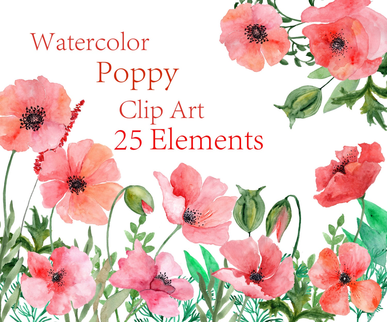 Watercolor Poppy flowers clipart Watercolor Floral clipart Red