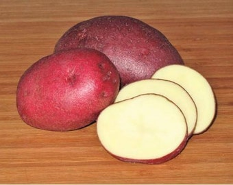 1 lb Red Cloud SEED POTATOES