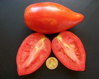 Paste Tomato- Amish Paste- 74 day Indeterminate- 25 seeds