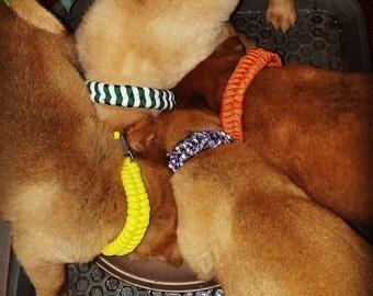 Fish Bone Paracord Dog Collar