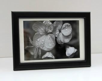 Black and white flower: Framed photo
