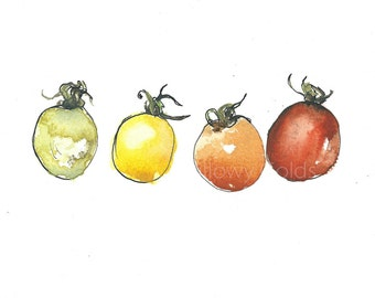 Art PRINT of an original watercolour and ink illustration, 'Tomatoes', original drawing, fruit, food, kitchen print, harvest,